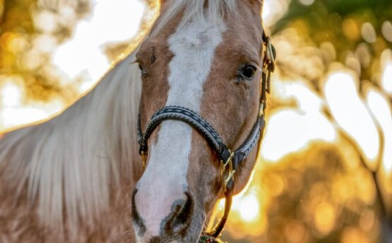 Equine Insurance: Let's Talk About Insuring Your Horse